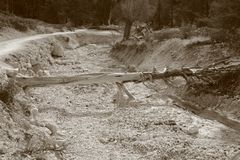 Dead wood in black and white. Dead wood lying across a dry riverbed as a makeshift bridge Royalty Free Stock Images