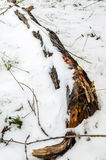 Dead Wood. In the Snow Stock Photography