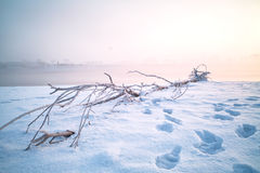 Dead wood on snow Stock Image
