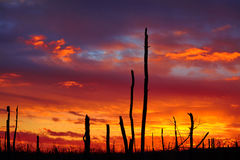 Dead wood on a sunset background. Dead wood at sunset, after the fire, a few years later stock photo