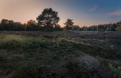 Dead wood. Sunset in the south of the Netherlands Royalty Free Stock Photos