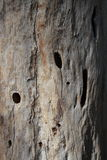 Dead wood texture Stock Images