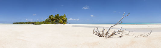 Dead wood on white sand beach panoramic view. Paradise white sand beach and palm tree of a tropical island panoramic view Royalty Free Stock Photos