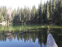 The Dead-woods in The Zminje Lake,The Durmitor National Park. The Dead-woods in The Zminje Lake,the reflection of the forest in the water,The Durmitor National Stock Image