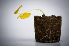 Dead yellow plant Stock Photos
