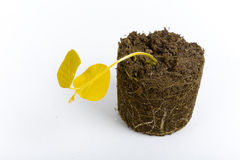 Dead yellow plant concept Royalty Free Stock Image