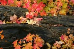 deadfal клен листьев Стоковое Изображение RF