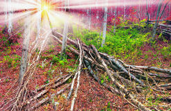 Deadfall at the Ukrainian Carpathians Royalty Free Stock Photos