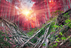 Deadfall at the Ukrainian Carpathians Stock Images