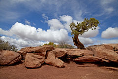 DeadHorse-Nationalpark Lizenzfreie Stockfotos