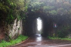 Deadlock road in the forest on Canary Island Royalty Free Stock Images