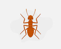Deadly Ant Royalty Free Stock Photography