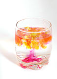 Deadly drink Stock Photography