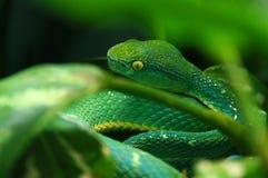 Deadly snake stock image