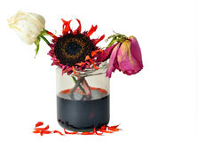 Deads flowers in glass jar on white Royalty Free Stock Images