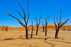 Deadvlei在纳米比亚沙漠 免版税库存照片