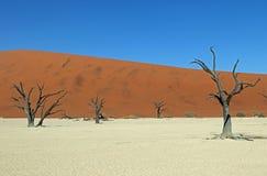 Deadvlei在Naukluft公园在de纳米比亚沙漠在纳米比亚 图库摄影