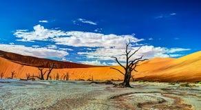 Deadvlei в национальном парке Namib-Naukluft, Sossusvlei, Намибии Стоковая Фотография