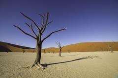 Deadvlei, или мертвое Vlei, в Sossusvlei, в равенстве Namib-Naukluft Стоковое Изображение