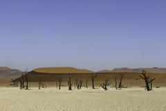 Deadvlei, или мертвое Vlei, в Sossusvlei, в равенстве Namib-Naukluft Стоковое фото RF