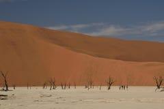 Deadvlei парка Namib-Naukluft в Намибии Стоковое Изображение
