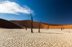 Deadvlei royaltyfria foton
