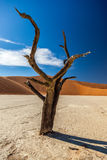 Deadvlei photos stock