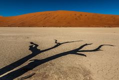 Deadvlei photographie stock