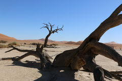 Deadvlei Foto de Stock Royalty Free