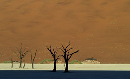 Deadvlei Stock Image