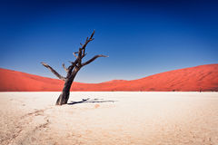 Deadvlei. Clay pan in Namibia royalty free stock photography