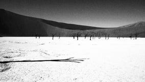 Deadvlei. Dead acacia trees in Deadvlei, Namib Naukluft Park, Sesriem, Namibia Royalty Free Stock Image