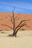 Deadvlei dead tree Royalty Free Stock Photography
