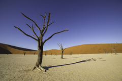 Deadvlei, or Dead Vlei, in Sossusvlei, in the Namib-Naukluft Par Stock Image