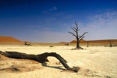 Deadvlei (deserto de Namib) Imagens de Stock