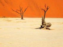 Deadvlei krajobraz, Namibia Obrazy Stock