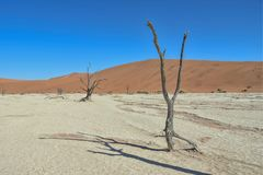 Deadvlei - la Namibia - 2017 Fotografia Stock