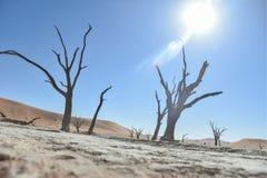Deadvlei - la Namibia - 2017 Immagine Stock