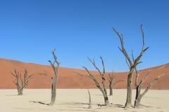 Deadvlei - la Namibia - 2017 Immagini Stock