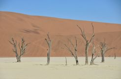 Deadvlei - la Namibie - 2017 Photo stock