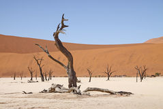 Deadvlei. Landscape at Deadvlei in Namibia Stock Photo