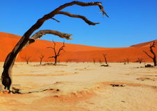 Deadvlei landscape, Namibia. Sossusvlei dead valley landscape in the Namib Desert, Namibia Royalty Free Stock Photography
