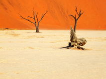 Deadvlei landscape, Namibia. Sossusvlei dead valley landscape in the Namib Desert, Namibia Stock Images