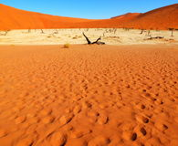 Deadvlei landscape, Namibia. Sossusvlei dead valley landscape in the Namib Desert, Namibia Royalty Free Stock Photos