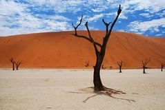 Deadvlei landscape. Sossusvlei, Namib-Naukluft Par. Deadvlei is a white clay pan located near the more famous salt pan of Sossusvlei, inside the Namib-Naukluft Stock Photos