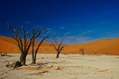 Deadvlei, Namíbia, árvores inoperantes fotografia de stock