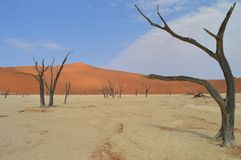 Deadvlei Namíbia Imagens de Stock