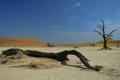 Deadvlei (Namib desert) Royalty Free Stock Image