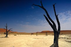 Deadvlei (Namib desert) Royalty Free Stock Photos