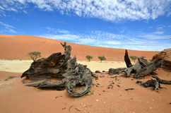 Deadvlei,Namib desert,Namibia Royalty Free Stock Photos